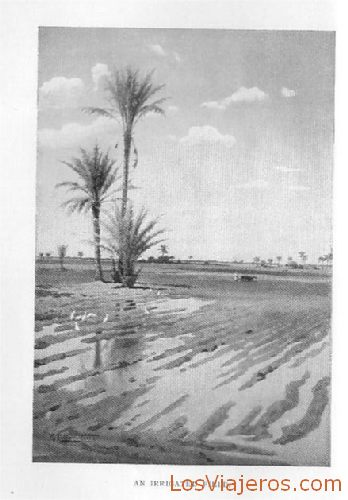 Field irrigated by the Nile - Egypt Campo abnegado por el Nilo - Egipto