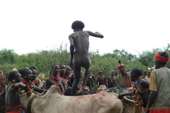 Cenit de la ceremonia de saltando el toro - Valle del Omo - Etiopia Bull jumping ceremony - Omo Valley - Ethiopia