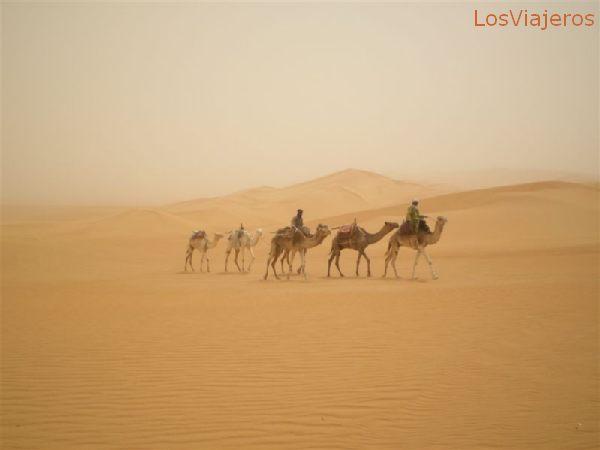 Camels in the storm - Libya Camellos en la tormenta - Libia