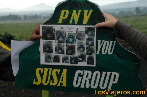 Gorillas: Susa group - Volcans National Park - Parc national des Volcans - Rwanda Gorilas:Grupo Susa -Parque Nacional de Los Volcanes - Ruanda