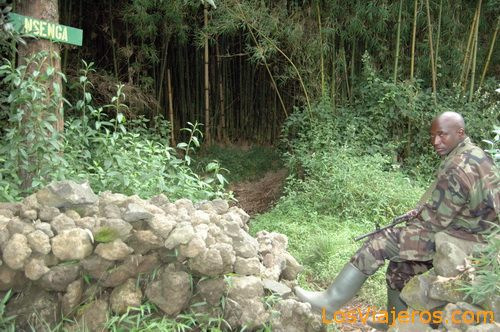 Gorilla trekking - Rwanda Trekking a los gorilas - Ruanda