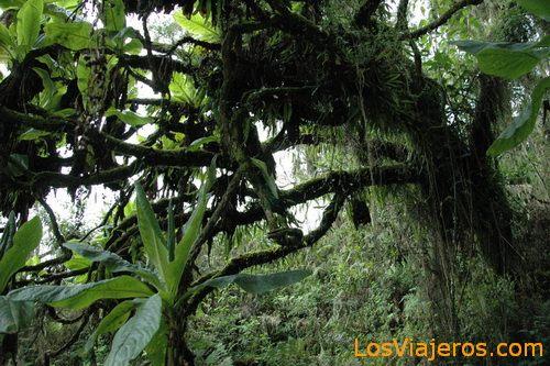 Vegetación - Ruanda Vegetation - Rwanda