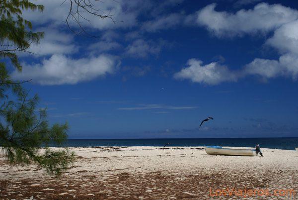 Cousin Island - Seychelles Isla Cousin - Seychelles