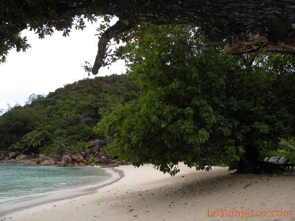 Trees along the seashore - Seychelles Árboles a pie de playa - Seychelles
