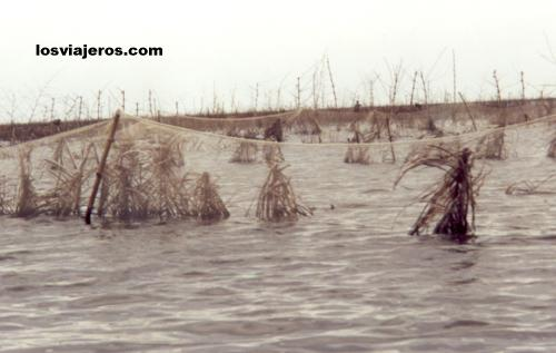 Nets in the lake - Ganvie - Benin Redes en el lago - Ganvie - Benin