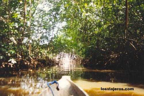Mangroves in Sassandra River - Costa de Marfil / Ivory Coast / Cote d'Ivoire