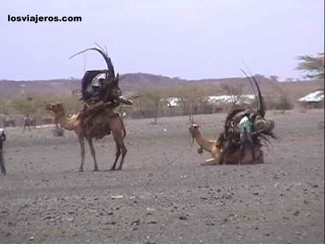 Gabra Tribe - Kenya Tribu Gabra - Kenia
