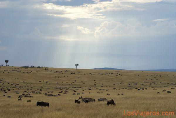 Massai Mara great migration - Kenya Gran Migración en Masai Mara - Kenia