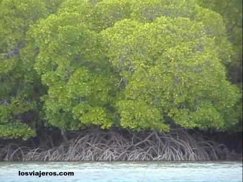 Mangroves - Kenya Manglares - Kenia