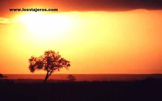 Puesta de sol en Maasai Mara - Kenia Maasai Mara Sunset - Kenya