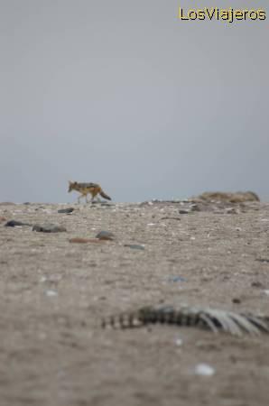 Costa de los esqueletos, Namibia Skeleton Coast - Namibia