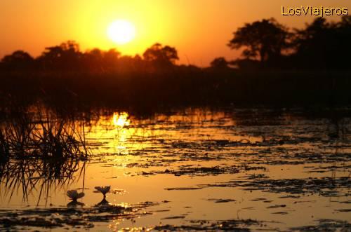 Sunrise in the Delta of the Okavango - Bostwana - Namibia Atardecer en el Delta del Okavango, Bostwana - Namibia