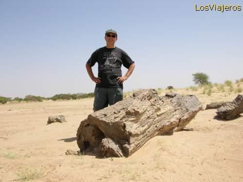 Fossilized tree near Abalak - Niger Arbol fosilizado cerca de Abalak - Niger
