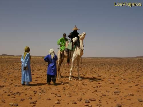Bororos on the way to the Gereewol celebration - Ingal(sahel) - Niger Bororos de camino fiesta Guerouel o Gereewol - Ingal(sahel) - Niger