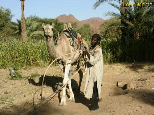 Getting the water with a camel - Timia - Niger Sacando agua con un camello - Timia - Niger