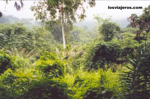 Landscape of the mountain rain forest - Pic d'Agou - Togo Exuberante selva de montaña en Togo.