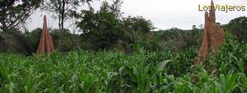 Termiteros- Togo
