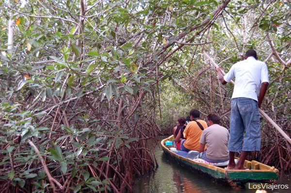Mangrove swamp in the Boquilla - Colombia Manglares en La Boquilla - Cartagena de Indias - Colombia