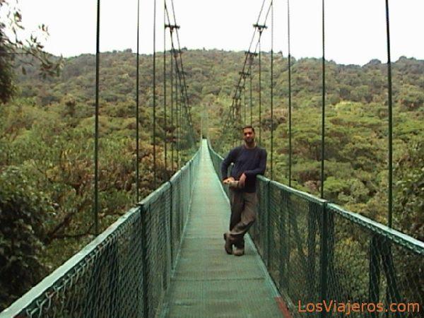 Monteverde - puentes elevados sobre el bosque - Costa Rica Monteverde - canopy walk - Costa Rica
