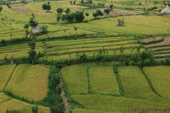 Rice fields -Tirtagganga -Bali- Indonesia Campos arroz -Tirtagganga -Bali- Indonesia