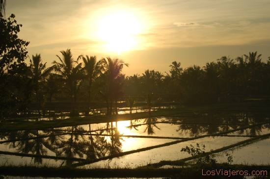 Puesta de sol en los campos arroz -Ubud -Bali- Indonesia Sunset at the rice fields -Ubud -Bali- Indonesia