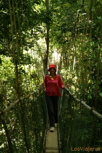 Canopy walk  -Borneo- Malaysia Canopy  Walk, paseo por la copa de los árboles - Sabah - Malasia