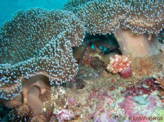 Arrecifes de coral en las Islas Maldivas