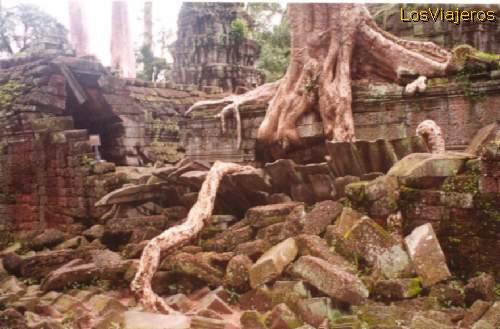 Giant trees growing over the ruins of Ta Prohm -Angkor- Cambodia Arboles enormes creciendo sobre las ruinas de Ta Prohm - Camboya