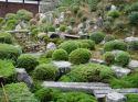 Ir a Foto: Jardines de Nikko - Japón  Go to Photo: Nikko Gardens - Japan