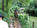Ir a Foto: Paseo en elefante, Mae Hong Son - Tailandia  Go to Photo: Elephant trip, Mae Hong Son - Thailand