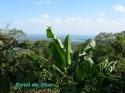 Cape Tribulation -Queensland- Australia